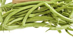 Grow Your Own Broad Beans