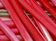 Grow Your Own Rhubarb