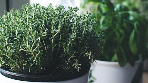 Grow Your Own Crops in Pots
