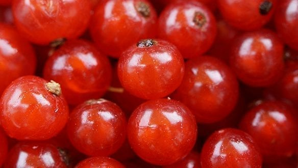 Grow Your Own Currants