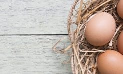 An egg a day may help child development