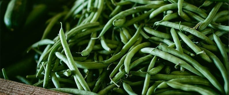 Grow Your Own Beans