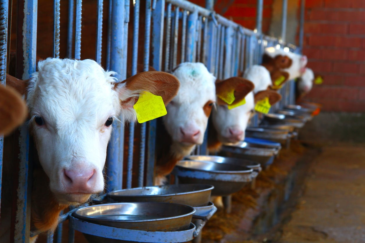 Cattle Farmers Left Frustrated at Plant-Based Meat Alternatives
