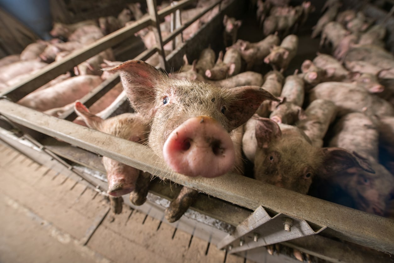 5 Ways to Remove Factory Meat from Your Diet