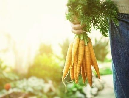 How to Start Organic Gardening