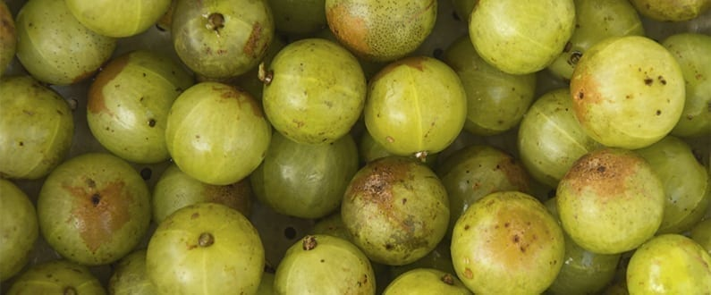 Grow Your Own Gooseberries