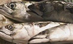 Fish-Free Diet