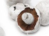 Edible Fungi