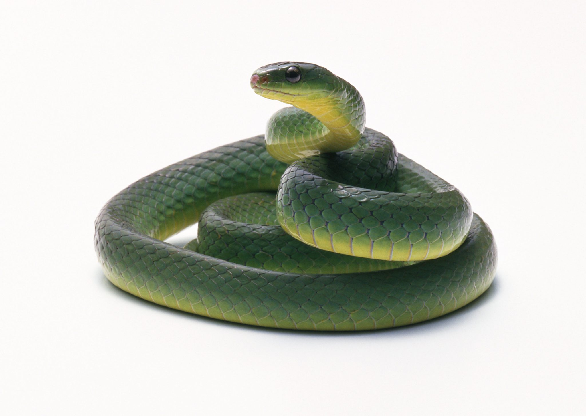 The Snake Diet is Another Weight-Loss Trend to Avoid